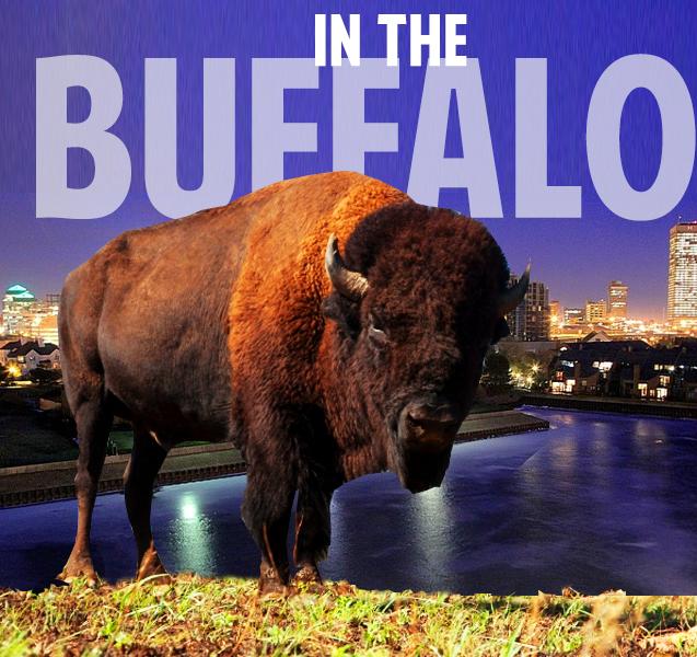 in-the-buffalo